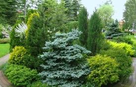 Хвойные растения ленинградской области